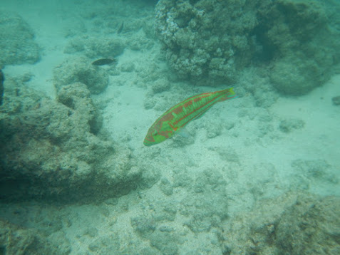 Hanauma Bay Snorkeling Review