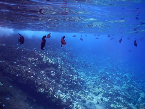 Molokini Crater Snorkeling