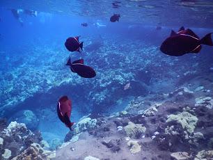 Molokini Snorkeling