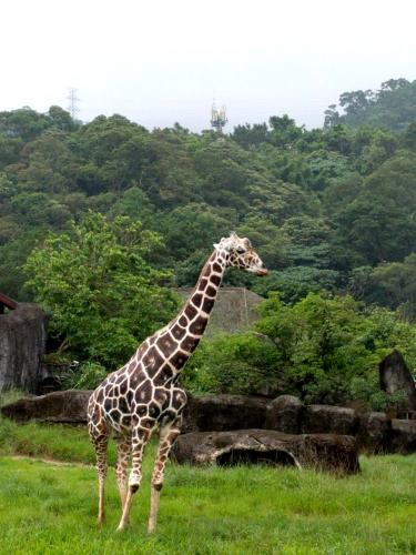 Things to do in Taipei - Taipei Zoo