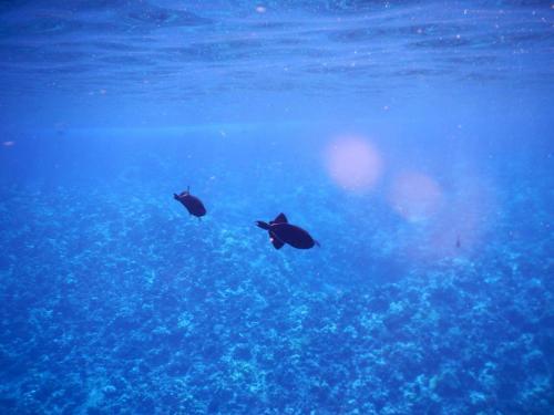 molokini snorkeling review