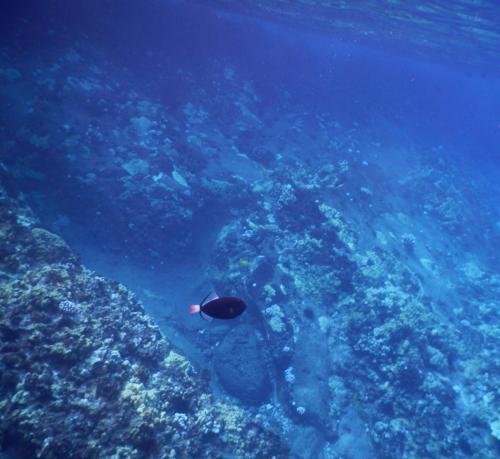 molokini snorkeling tour review